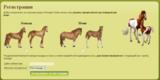 Виды лошадей