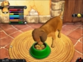Питание пса